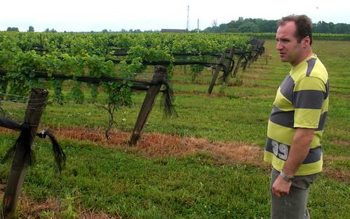 BK vineyards 2