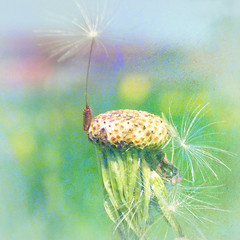 Vertical Lift-Off (virtually_supine) Tags: light colour square weeds bokeh manipulation dandelion textures layers wildflowers serendipity didcot blending disintegration dandelionseed beautifultribute photoshopelements7 artistictreasurechest magicunicornverybest sbfmasterpiece restorefleetmeadow floatingdandelionseed