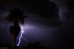 Dancing with a palm tree (xTexAnne -SoDamnBusy!) Tags: arizona storm tucson monsoon thunderstorm lightning nikond90 diannewhite