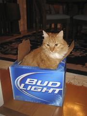 alcoholic bailey
