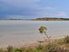 Larnaca salt lake (Mike G. K.) Tags: lake plant water nikon salt cyprus saltlake larnaca larnaka d5000 mikegk:gettyimages=submitted