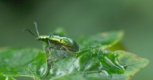 insecto amarillo-verdoso by alopez2006