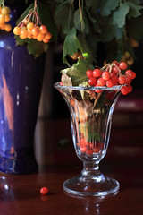 Surrendered To Pleasure, To Color And Light (panga_ua) Tags: light red stilllife glass sunshine yellow composition canon reflections lights berry ceramics berries shadows dof availablelight details ukraine vase sheen arrangement tabletop bodegon artisticphotography fragments naturamorta artphotography viburnumopulus kalyna snowballtree guelderrose europeancranberrybush footedbowl crampbark polishedsurface waterelder nataliepanga surrenderedtopleasure tocolorandlight footedbowlwithflaredtop