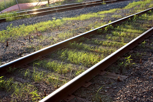 grass growing between the rails