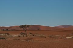 Sossusvlei (Roelie Wilms) Tags: red sand desert dunes namibia sossusvlei namibi