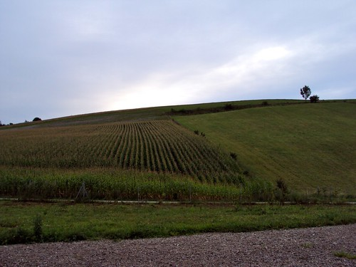 Preparation for Road trip: Budapest to Cologne, Fields in Germany