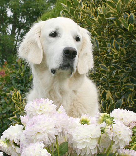 Ditte poses with Dahlias!