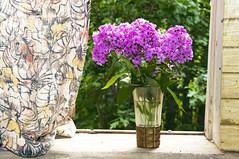 цветы на ДР