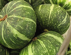 [photos-unripe kabocha japanese pumpkins]