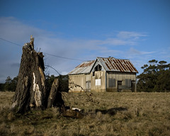 Connected (rockpool73) Tags: rural country australia victoria oldbuilding treestump trentham nikond80