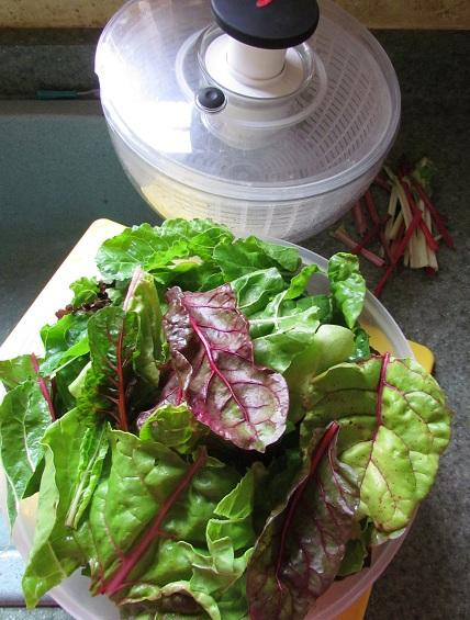 Swiss Chard in Salad