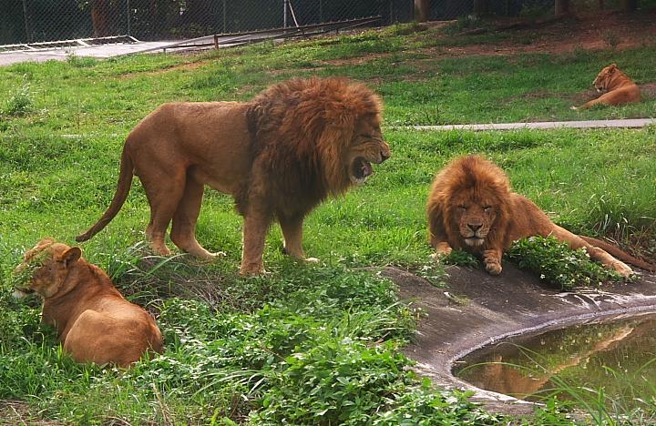 六福村動物園044