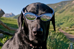 Mollie Goat (Mike Berenson - Colorado Captures) Tags: dog reflection colorado gothic mollie allrightsreserved crestedbutte blacklabradorretriever gothicmountain mountcrestedbutte coloradocaptures copyright2011bymikeberenson molliegoat