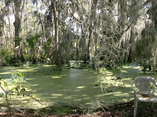 Mossy, Swampy Creek
