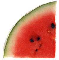 SHARKMELON_LOGO_square