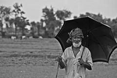 IMG_6978 (Asif Adnan Shajal) Tags: old white man black color green nature field work dark photography evening photo village border picture oldman gram dhaka bangladesh asif represent adnan 2011 deshi chuadanga shajal asifadnanshajal asifadnanshajalphotography asifadnan asifadnanphotography