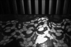 james ensor museum (*tara) Tags: blackwhite shadows curtain oostende zw