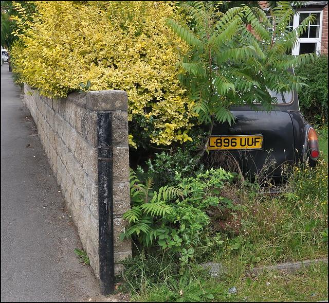 Best of Oxfords Gardens 96