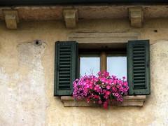 Verona (Graa Vargas) Tags: italy flower window verona itlia graavargas duetos 2011graavargasallrightsreserved 9606150812
