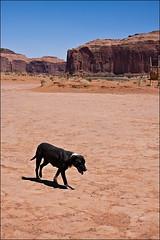 The lonesome (*Glueckskind*) Tags: usa amerika monumentvalley hund dog canon40d john wayne utah arizona navajo navajonation keinschatten noshadow heisheute
