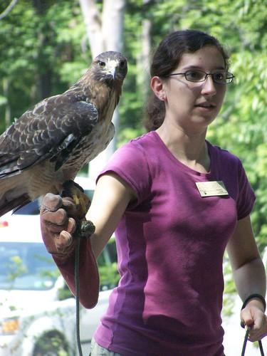 redtail hawk by Emilyannamarie