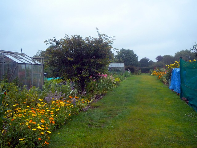 dads allotment