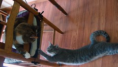 Gracie & Millie 3 July 2011 5856b 175 (edgarandron - Busy!) Tags: cats cute cat gracie tabby kitty kitties tabbies millie graytabby patchedtabby