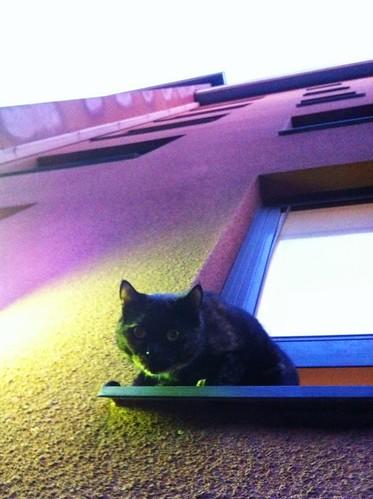 Kirjailijanpuiston kissa moikkaa