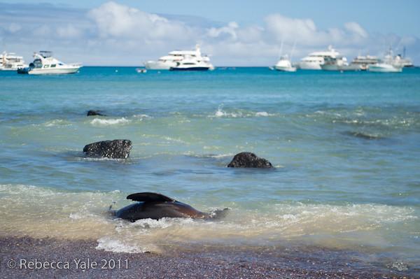 RYALE_Galapagos-234