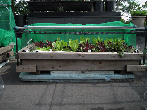 SIP-First raised bed convert