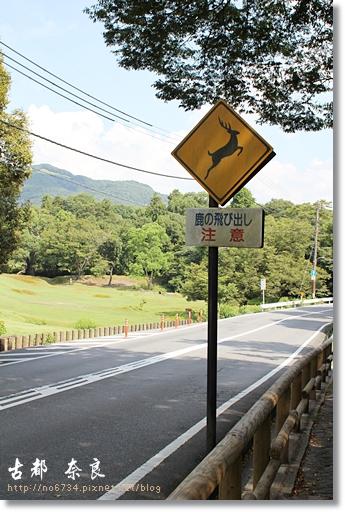 20110711_4thDay Nara _0736 f
