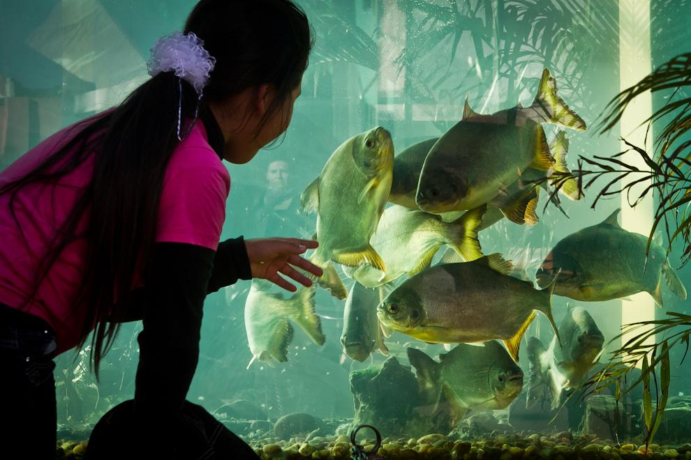 Una niña observa con atención a los peces en una gran pecera frente a uno de los tantos stands habilitados en la Expo. (Tetsu Espósito)