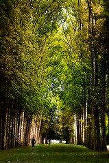 Forest Dream (Repp1) Tags: trees france forest dream arbres versailles fort alle d300 rve cs5