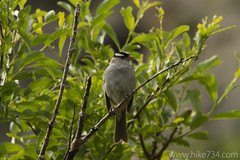 "White-crowned Sparrow • <a style=""font-size:0.8em;"" href=""http://www.flickr.com/photos/63501323@N07/5982723360/"" target=""_blank"">View on Flickr</a>"