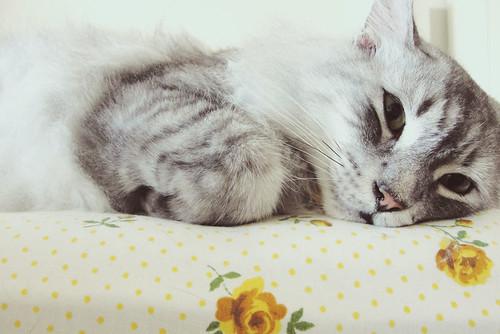 Sweet BabyCat...