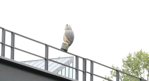 Owls at Wembley Park station