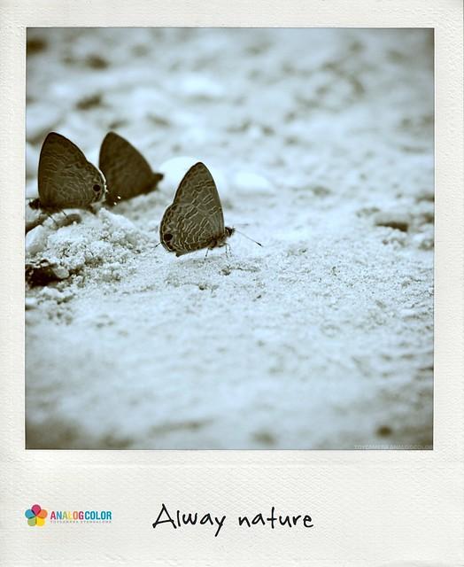 Three Moths on sand 02