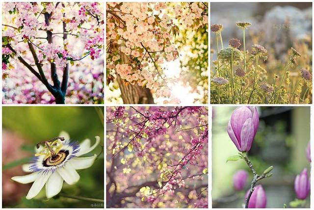 Mosaico Flores 6