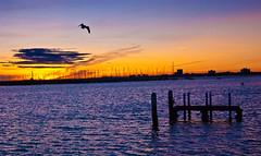 Generic Sunset shot #326 (Ninja Hamster) Tags: sunset sea sky color colour beach colors landscape pier ship glow colours harbour dusk australia melbourne victoria soe stkilda nikonflickraward ringexcellence dblringexcellence