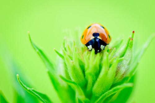 2011 07 07 Ladybug 008