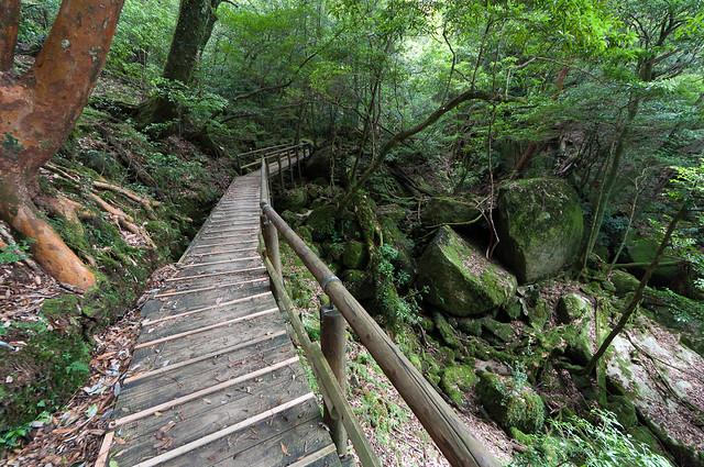 弥生杉周辺の歩道