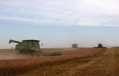 Finishing up a winter wheat field