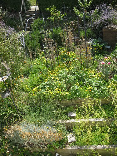 Veg bed 1st August 2011