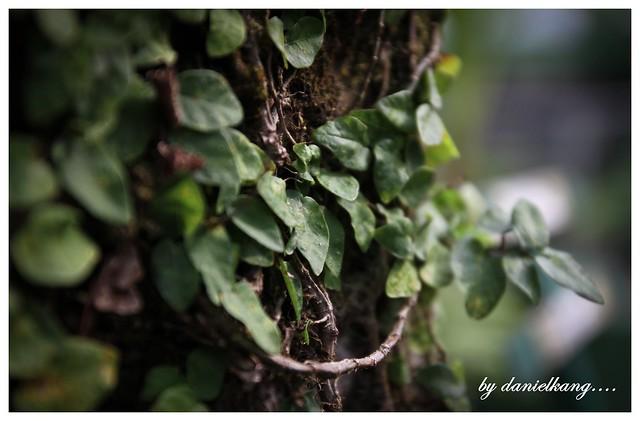 Green revolution.......