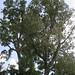 dawes_arboretum_20110625_17333
