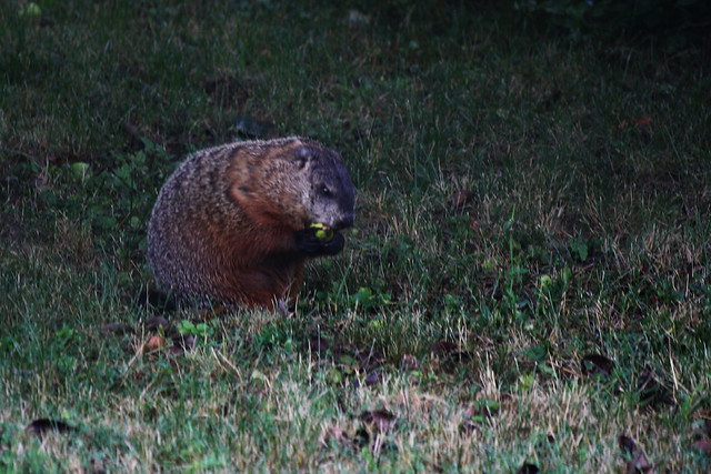 Day 337 - Hey Groundhog