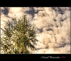 Against the sky - Auto Weltblick MC 35mm f2,8 M42 (Margall photography) Tags: auto sky tree clouds 35mm photography mc m42 marco f28 hdr galletto margall weltblick
