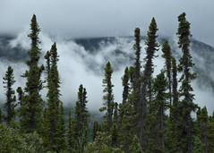 Cloudy Morning (Lee Petersen) Tags: trees fog clouds forest copperriver