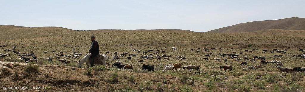 C'est surtout l'élevage qui est pratiqué dans ces lointaines contrées de la région de Samarcande