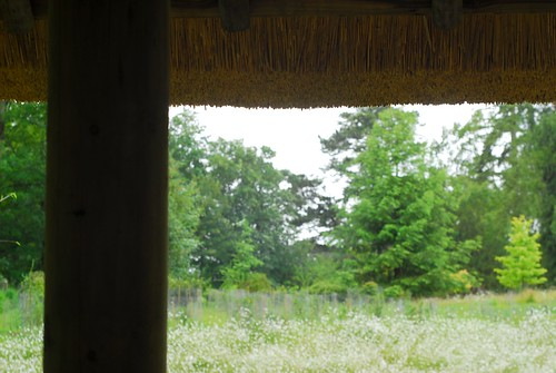 View from shelter, Japanese garden, Kingston Lacy